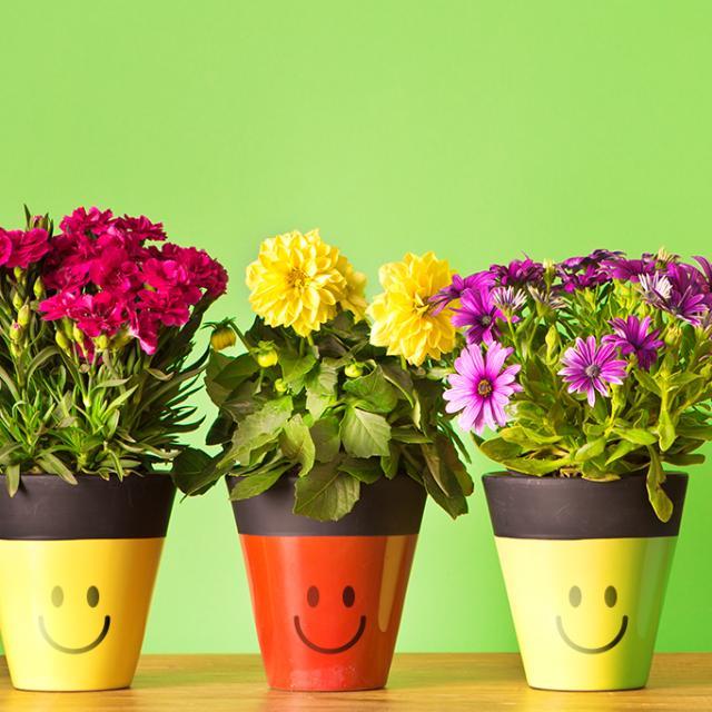 Imagem do grupo Dicas sobre plantas